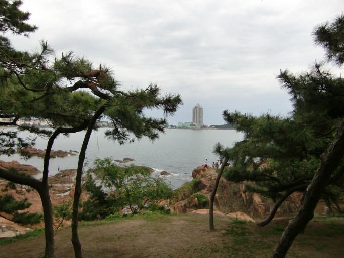 青岛八大关松树
