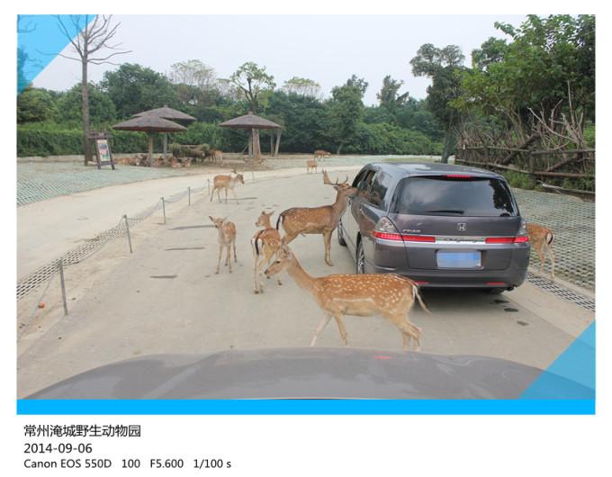 2014-9-6常州淹城野生动物园 无锡灵山大佛