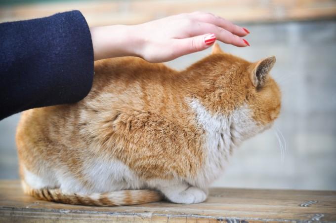 壁纸 动物 狗 狗狗 猫 猫咪 小猫 桌面 680_452