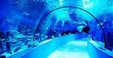 壁纸 海底 海底世界 海洋馆 水族馆 480_250