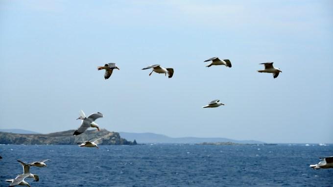 米克诺斯岛,碧海蓝天, 白墙瓦舍组成的小岛是爱琴海上唯一可与圣托里