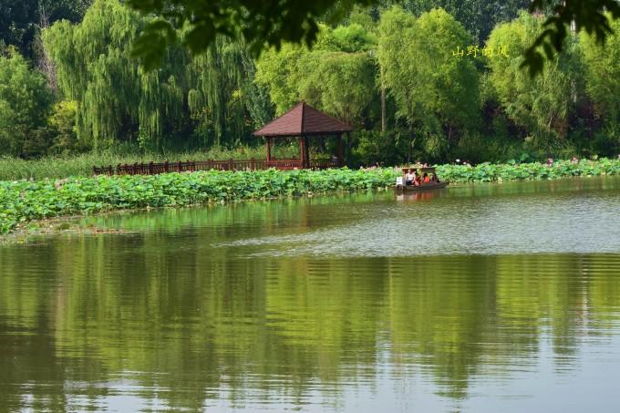"""从秦皇岛市区向西驱车30分钟左右, 便到了位于秦皇岛开发区的""""戴河生态园"""",这是一个供大家休闲的免费公园。公园比邻城市,又紧依乡村,生机勃勃但不喧嚣,精致细腻但却含着粗犷。高楼大厦和乡间柴火都近在眼前。 仲夏时节,戴河生态园河水潺潺,绿草如茵,树木青翠,荷花盛开。环绕公园的小路绵延10里,掩映在松柏、白桦、银杏、橡树、五角枫之中,平桥叠瀑、云泽秋月、桦里人家、石滩塔影等景观映入眼帘,好似一幅水墨长卷 。进入公园正门,便可看见沿岸盛开的荷花绵延数里。这些荷花与南戴河中华荷园里的荷花有着显"""