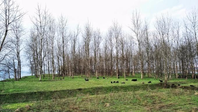 小学树林油画风景图片